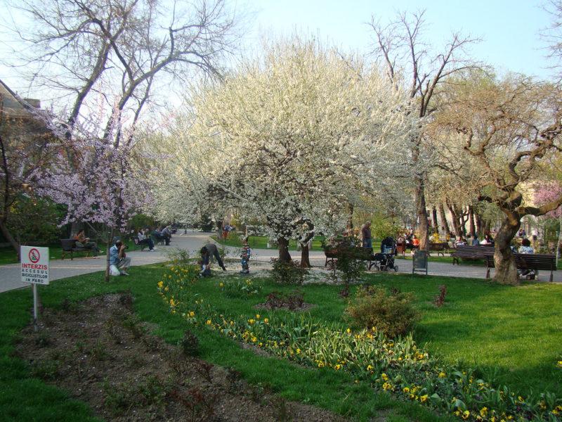 The hidden gem – Ioanid Park