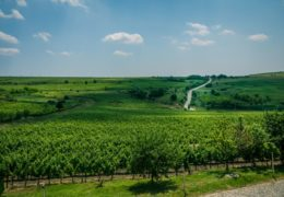 Wine tours – Wine tasting and stories about the upbringing of Romanian Wines